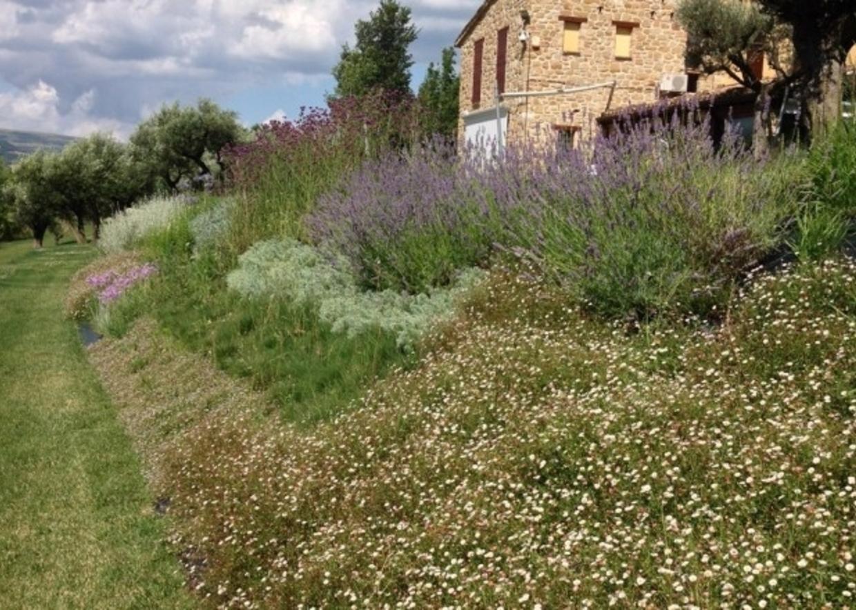 Giardini mgf cosa piantare - Piante striscianti per scarpate ...