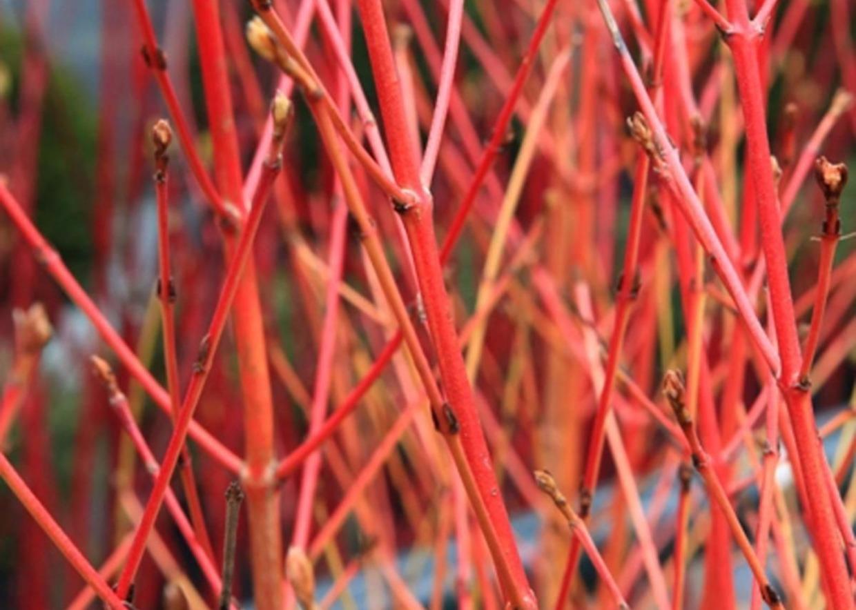 Pianta Foglie Rosse E Verdi giardini mgf] | le migliori piante per rinsaldare le scarpate