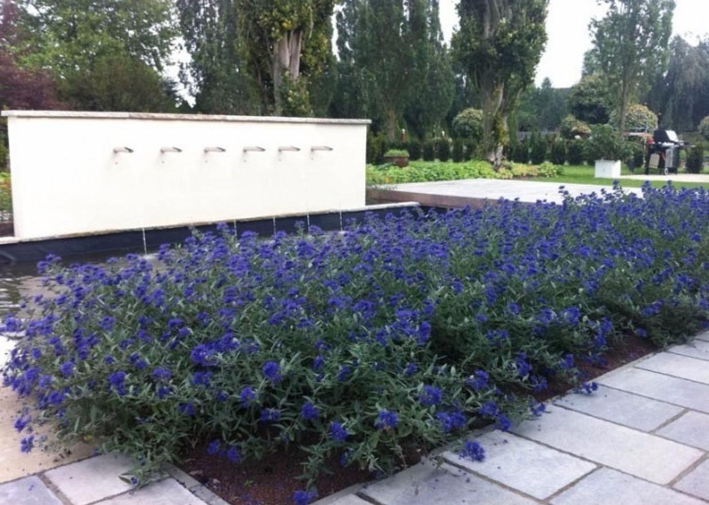 Giardini mgf le variet pi adatte per realizzare bordure for Cespugli perenni