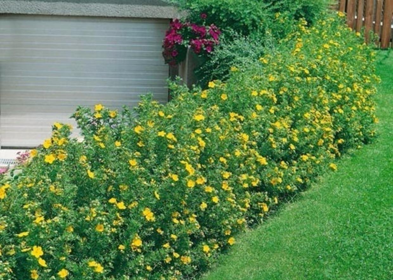 Fiori Gialli Per Bordure.Giardini Mgf Le Varieta Piu Adatte Per Realizzare Bordure
