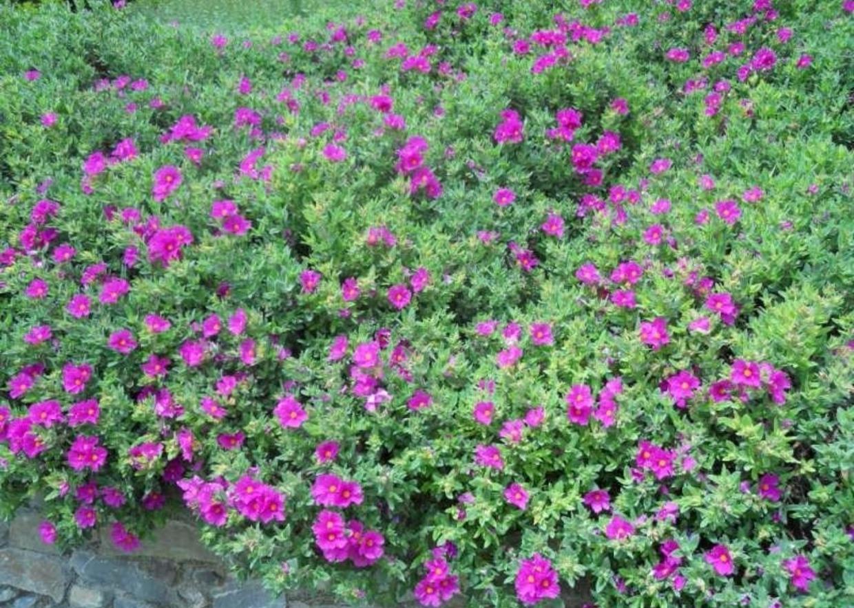 Piante Per Aiuole Perenni giardini mgf] | le varietà più adatte per realizzare bordure