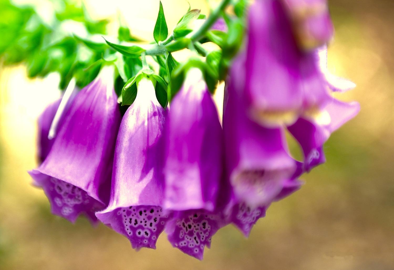 Giardini mgf le piante da giardino velenose for Le piante da giardino
