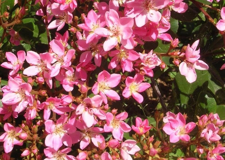 Pianta Foglie Rosse E Verdi giardini mgf] | le varietà più adatte per realizzare siepi