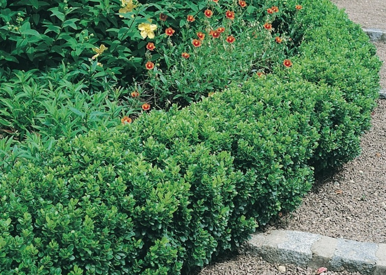 Giardini Mgf Le Varietà Più Adatte Per Realizzare Bordure